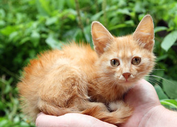 pets caregiving